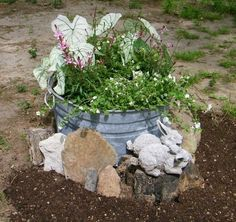 My newest planter - old washtub we had laying around. Rocks/fossils were my FIL's - hold special meaning for hubby..