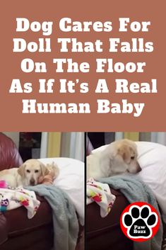 When Sandy's favorite doll seems to be in any kind of trouble, the loving dog's maternal instincts kick in.