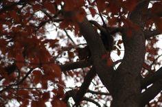 Ferran Sant, les meves fotos: Esquirol