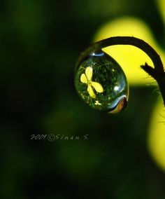 holding a droplet by sinantr