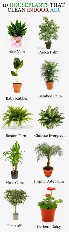 10 Houseplants that clean indoor air.