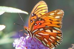 How to Make a Homemade Butterfly Feeder (with Pictures) | eHow -- It's the least we can do for these beautiful creatures. #PinMyDreamBackyard