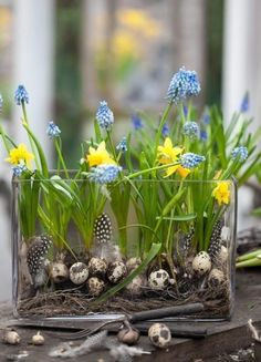 Spring Bulbs #Flowers
