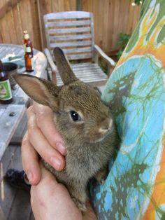 hlime:  bunny portrait.