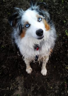 muddy aussie, via reddit