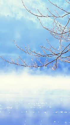 Nature Winter Clear Sunny Snowy Tree Branch Skyscape IPhone 6 Wallpaper
