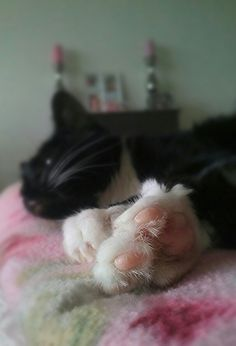 Lovely paws <3