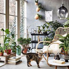 Yes please #indoorgarden #homeinspiration #getyourgreenon