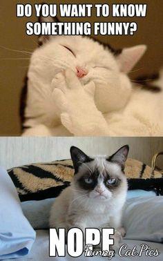 Grumpy Cat Grumpy cat best one yet. I love grumpy cat. dog faces That's my Grumpy Cat Grumpy Cat Quotes, Funny Grumpy Cat Memes, Cat Jokes, Animal Jokes, Funny Animal Memes, Funny Cat Videos, Funny Animal Pictures, Funny Animals, Funny Jokes