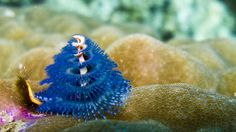 78 Best Christmas Tree Worms Images