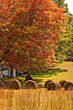 Autumn in West Virginia (by Steve Harrington)  Love the hay bales and the clothes hanging on the line.