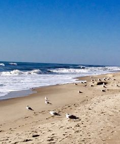 Atlantic Beach, NC, by Fay Yaniero