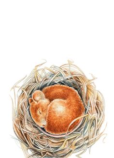 Mouse in the nest Art Print
