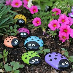 Ladybug painted stones.  Picture taken from Facebook posting by Judy  Curtis June 2016.