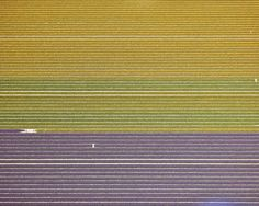 Amazing Aerials Let You See #ALLtheTULIPS | Credit: David Burdeny | From Wired.com