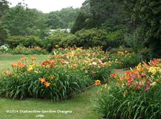 formal daylily beds, long island