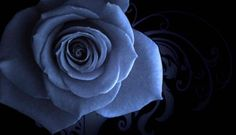 "Photo from album ""Любимые обои"" on Yandex. Blue Roses Wallpaper, Black Background Wallpaper, Background Pictures, Flower Wallpaper, Black Backgrounds, Hd Wallpaper, Wallpaper Gallery, Beautiful Wallpaper, Blue Wallpapers"
