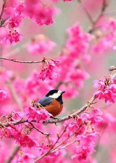 Birdy,