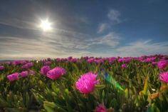 Por Suances...#disfrutaCantabria Beautiful, Flowers, Plants, Florals, Planters, Flower, Blossoms, Plant, Planting