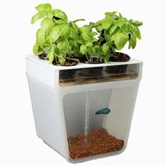 SELF-CLEANING FISH TANK GARDEN product design