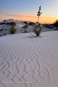White Sands National Park - New Mexico, USA check this one off the list, been here BEAUTIFUL!!