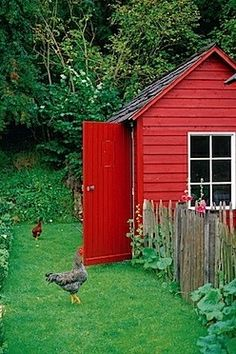 red chicken house + rustic + country + landscape
