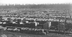 Old School Pictures, Westwood California, Lumber Mill, California History, Old Trees, Red River, Vintage Pictures, Logs, Basin