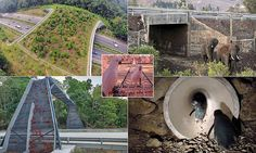 Here, MailOnline reveals some of the world's most inventive wildlife crossings, which help creatures as small as doormice in Wales to beasts as large as elephants in Kenya.