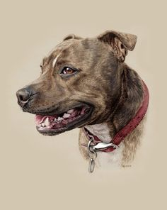 This is beautiful picture Staffordshire Bull Terrier by Steph Dix Animal Paintings, Animal Drawings, Staffy Dog, Pitbulls, Color Pencil Art, Dog Portraits, Dog Art, Beautiful Dogs, Pitbull Terrier