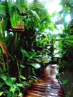 Walkway to paradise. walkway to paradise tropical garden design, tropical backyard Balinese Garden, Bali Garden, Lush Garden, Dream Garden, Garden Paths, Shade Garden, Garden Villa, Tropical Garden Design, Tropical Backyard