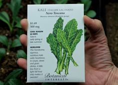 How to Grow Kale {Start to Finish}