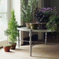 Lovely arrangement of indoor garden.