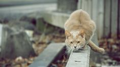 #1408683, cat category - wallpapers free cat