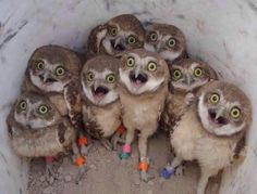 #BrianWilliams tells a story to a group of unsuspecting owls. Poor things