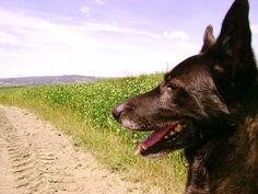 """...on the same path...Bobo the dog is experimenting the nature walk's tour that we offer to all of you! Go and check on our web site (June 4th- 2013 South Tuscany) ...Sullo stesso percorso valdorciano... Il mio cane Bobo sta sperimentando lo stile di una passeggiata a 6 zampe """"Off Leash"""" (senza guinzaglio) con guida privata.  Andate a visitare il nostro sito, siete i benvenuti! (4 giugno 2013)"""