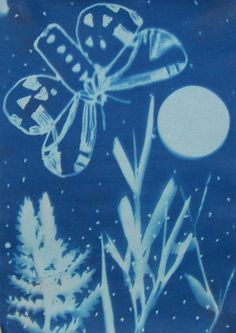 """Fourth graders worked from photos to draw detailed moths.  They used  Sharpies to trace their best drawing onto a transparency.  The transparency was arranged with weeds, ferns and grasses to create a landscape.  Stars were dots and dabs of Sharpie, and the moon was made from cut paper.  Students placed their compositions in the sun for 5 minutes, then submerged them in water."""