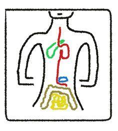 Stoffwechsel ankurbeln in 6 Schritten, damit Sie in 4 Wochen dauerhaft und gesund bis zu 3 Kilo abnehmen. Hier steht, wie es geht.