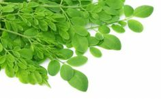 el King Moringa is a online store to buy Moringa Oleifera Products. Moringa Oleifera is a natural nutrition supplement food better health and performance. Benefits Of Moringa Leaves, Oregano Oil Benefits, Miracle Tree, Moringa Powder, Food And Thought, Cancer Fighting Foods, Coco, Natural Health, Herbalism