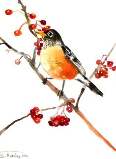 Robin and Berries, Original wateroclor painting, 12 X 9 in, robin bird art, american robin