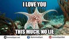 Photos of Octopus Memes Funny Animal Memes, Funny Animals, Davy Jones, Marine Biology, Love You So Much, Octopus, How To Find Out, Creatures, Photos