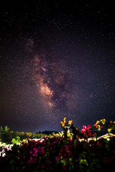Milky way and flowers