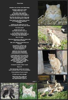 A poem I wrote about the cats in need on our farm.