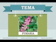 Beneficios, nutrientes y propiedades de la fumaria. Más información en: http://www.remediocaseronatural.com/comidas-sanas-beneficios-fumaria.htm