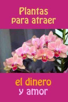 5 Plantas para atraer el dinero y amor #dinero #amor #hogar