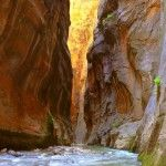 """""""Wall Street in the Narrows of the Virgin River - Zion"""" Zion National Park, National Parks, Places To Travel, Places To See, Small Ship Cruises, Us Park, Cross Country Trip, Utah Hikes, Travel Log"""