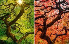 Лято Vs. есен