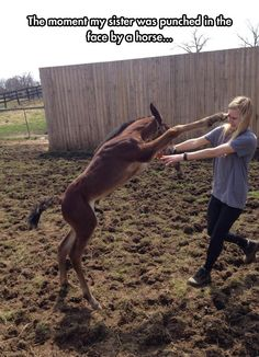 Too Much Horsing Around  // funny pictures - funny photos - funny images - funny pics - funny quotes - #lol #humor #funnypictures