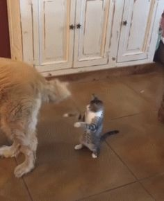 The Evil Dogs Tail Needs to Be Defeated