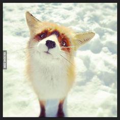 Cutest Fox Ever!