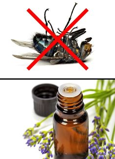 10Ways toMake NoInsect Raid Into Your Home Ever Again